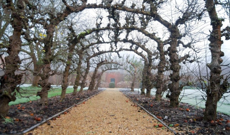Broadlands Estate Hampshire - Tree Lined Walkway