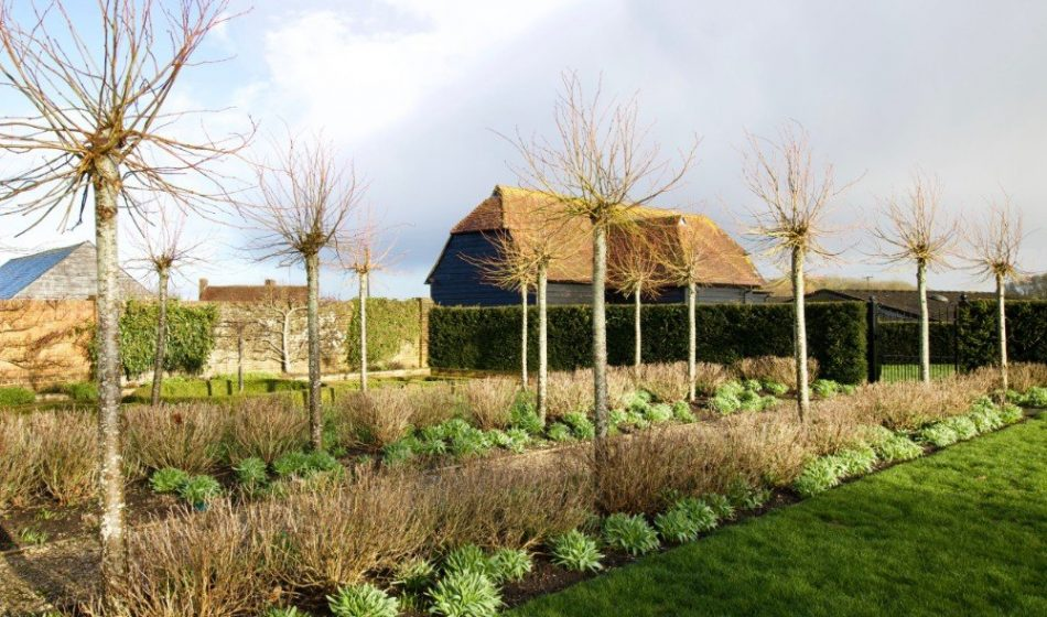 Farmhouse Hampshire - Formal Tree Lined Walkway in Winter