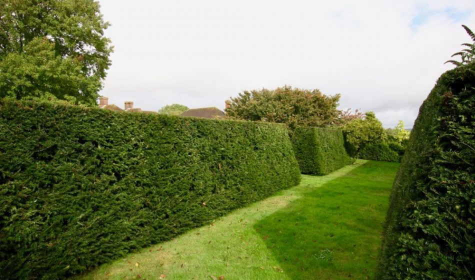 Farmhouse West Sussex - Formal Hedges