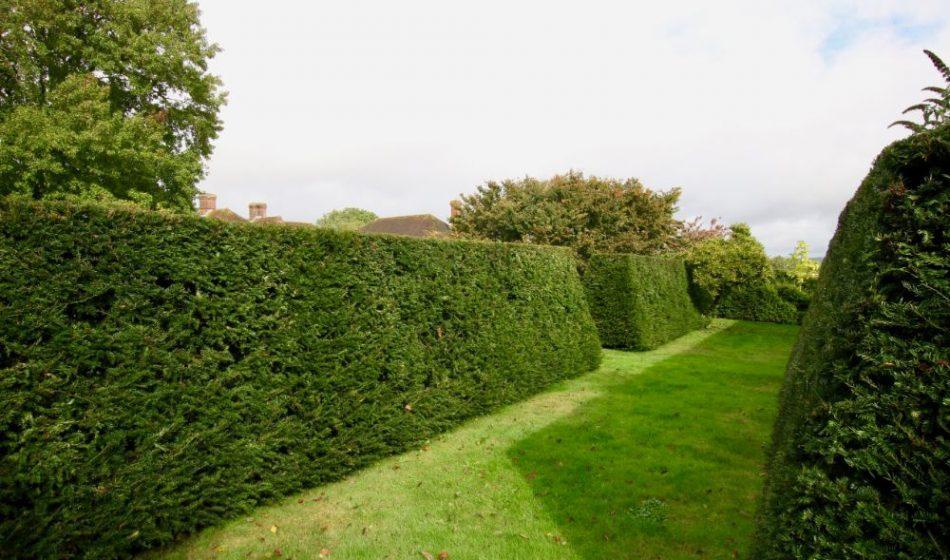 Farmhouse West Sussex - Formal Hedges