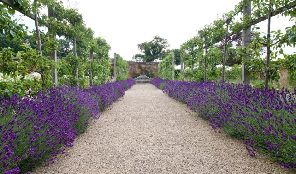 Georgian House, Hampshire Project - Lavender Lined Pathway Leading to a Bench