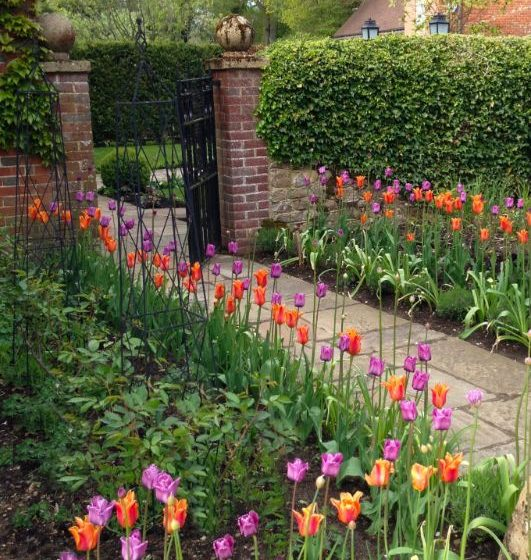 Mill House Surrey - Tulip Flower Border