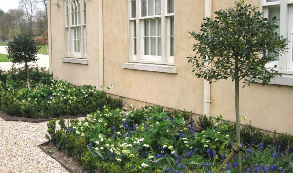 New Cottage Orné, Hampshire - Border with Grape Hyacinth