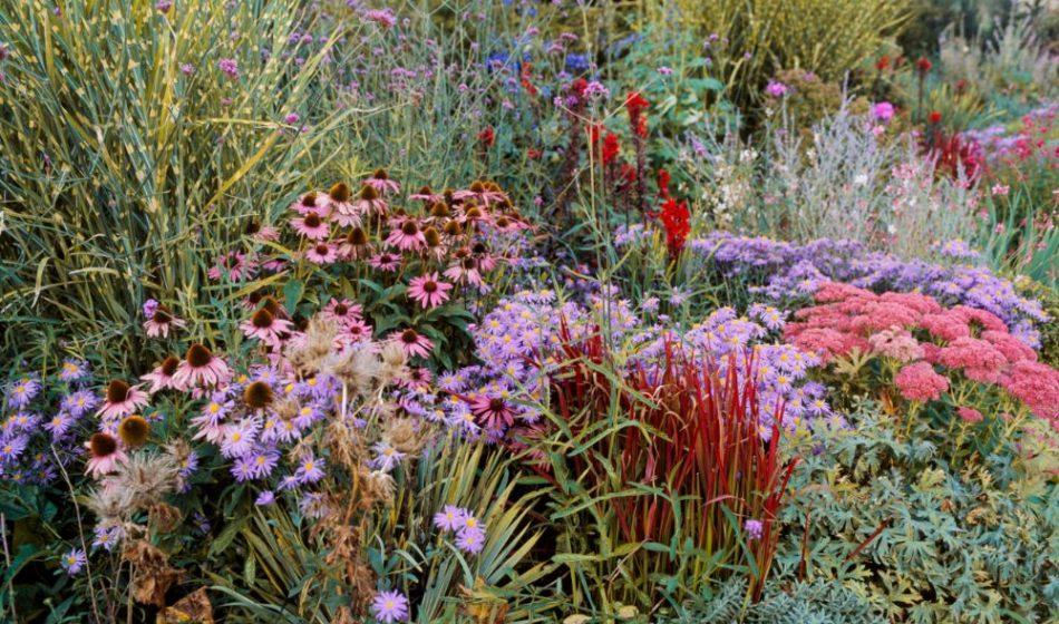 Old Rectory Berkshire - Herb Border Close Up