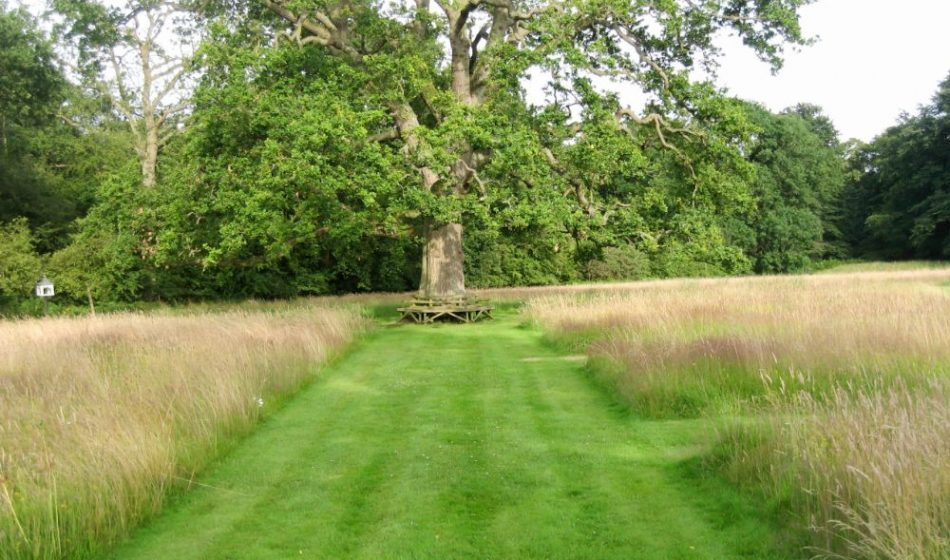 Old Rectory Berkshire - Grass Meadow with Oak Tree