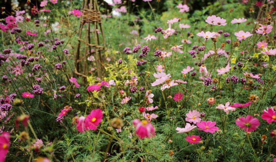 Old Rectory Berkshire - Wildflowers