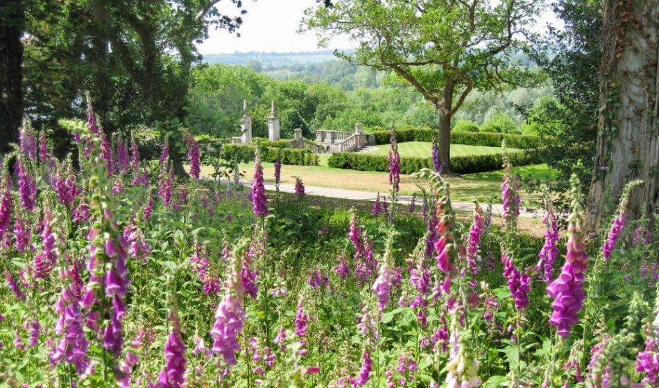 Marsh Court Hampshire - Foxgloves