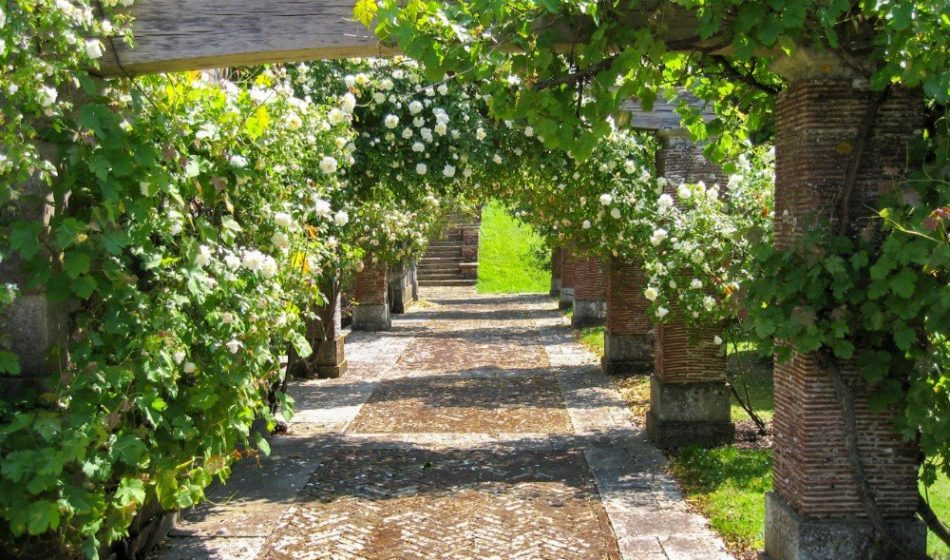 Marsh Court Hampshire - Tree Lined Walkway