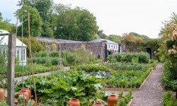 Kitchen Garden Design