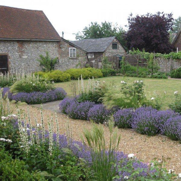Lavender Borders in a Garden