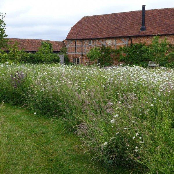 Wildflower Meadow Besides House