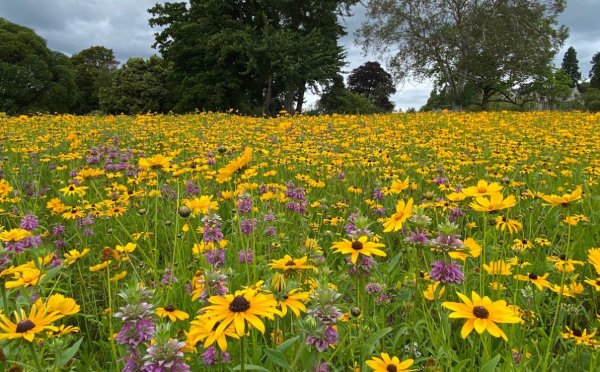 Designing a Wildflower Meadow